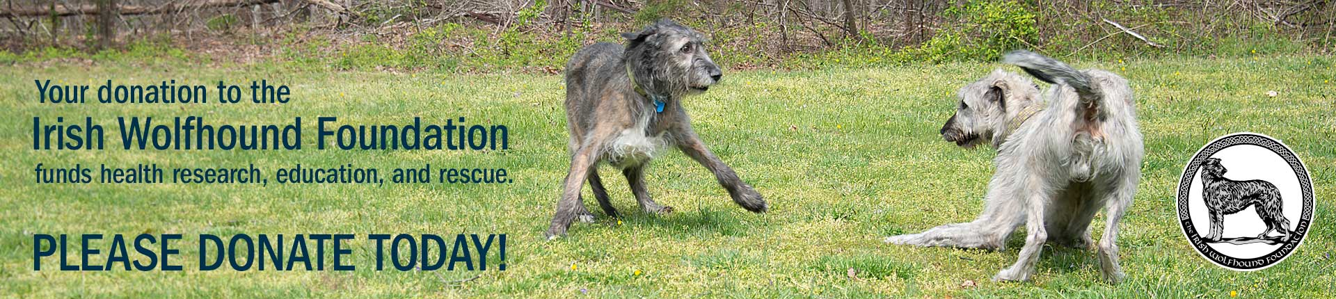 Your donation to the Irish Wolfhound Foundation                  funds health research, education, and rescue. Please donate today!